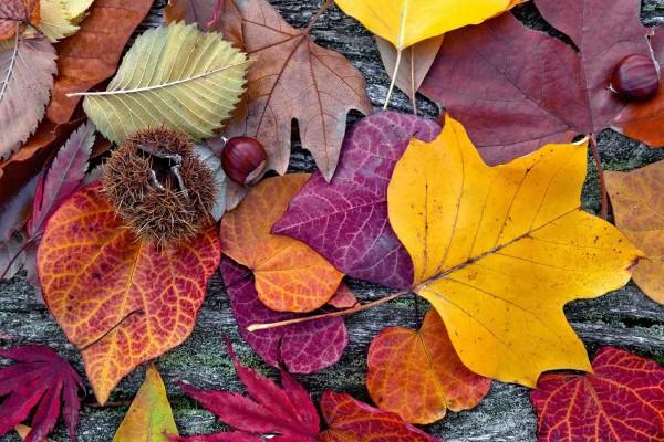 Vliestapete Herbst 375x250