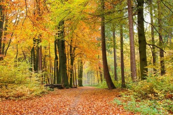 Vliestapete Wald im Herbst 375x250