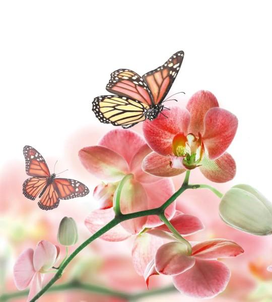 Vliestapete Orchidee und Schmetterling 225x250