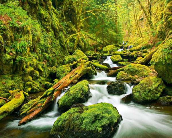 Vlies Wandbild Grünes Tal Bachlauf