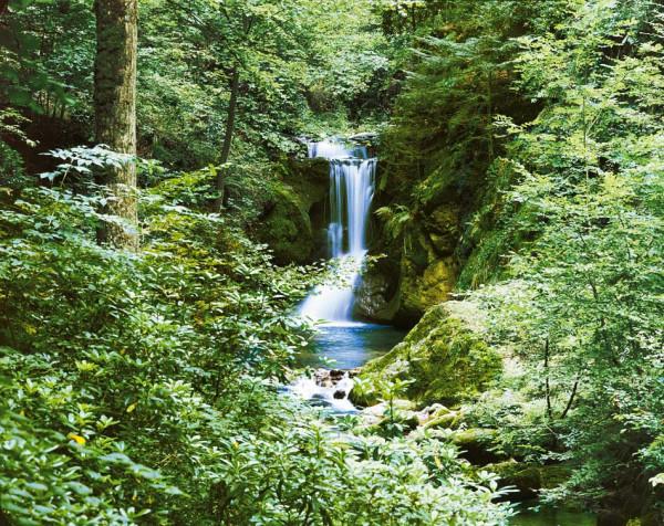 Fototapete Wandbild Quelle Wasserfall Quelle