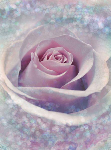 Vliestapete Fototapete Blütentraum Rose