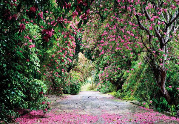 Fototapete Blumenhecke im Park