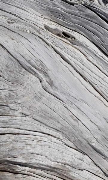 Vlies Fototapete Holzstruktur 150x250