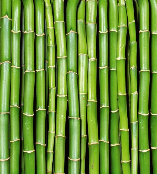 Vliestapete Bambus 225x250