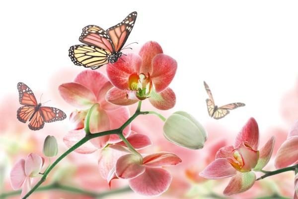 Vliestapete Orchidee und Schmetterling 375x250