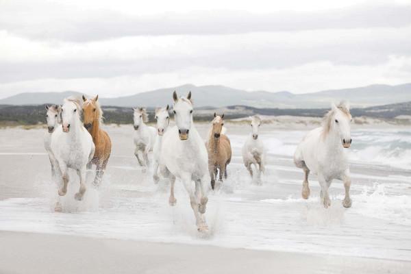 Fototapete Wildpferde