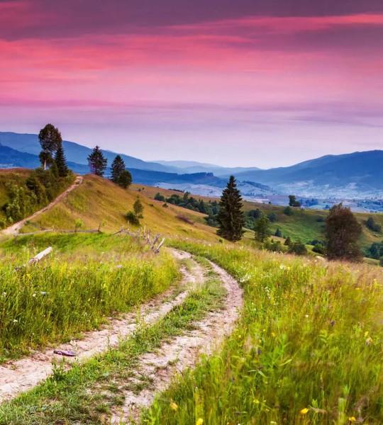Vliestapete blühende Hügel 225x250