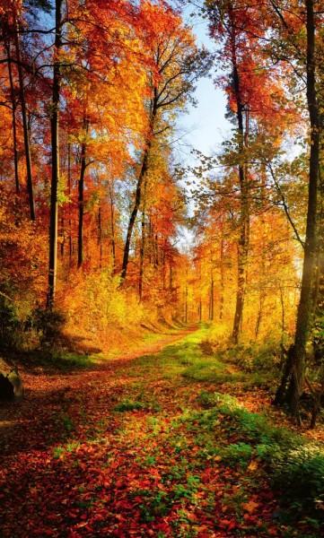 Vlies Fototapete Herbstwald 150x250