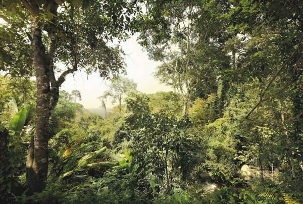 Vliestapete Fototapete Dschungel Busch