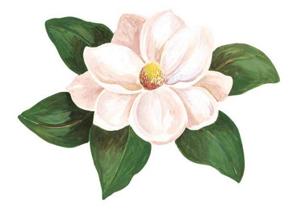Wandsticker Blumen Magnolie