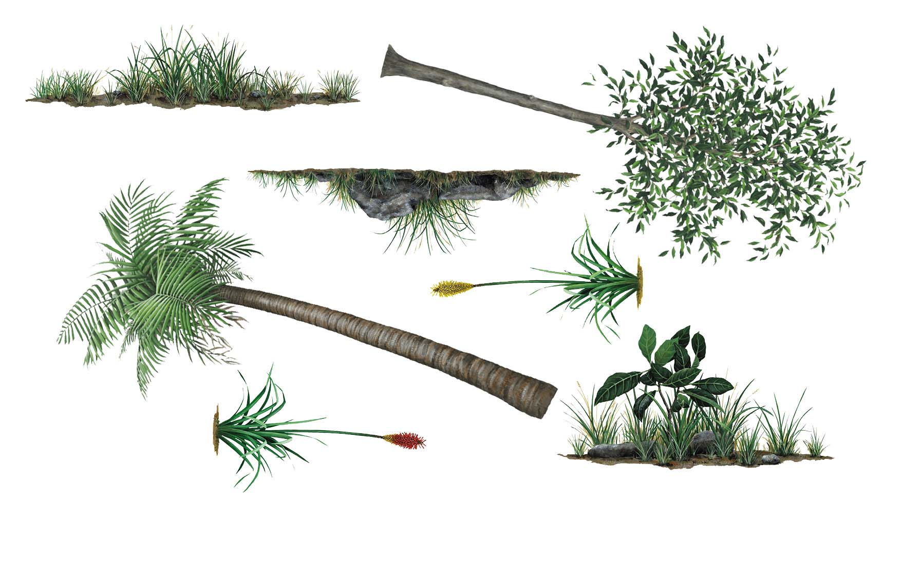 Beeindruckend Wandtattoo Gras Ideen Von