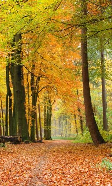 Vlies Fototapete Wald im Herbst 150x250