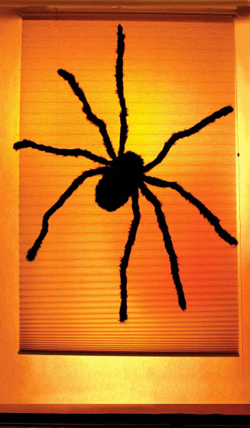 WOWindow-Poster Fensterbild Spinne