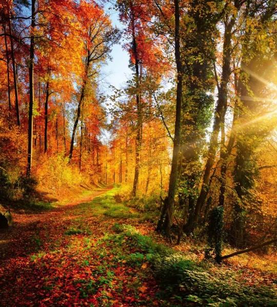Vliestapete Herbstwald 225x250
