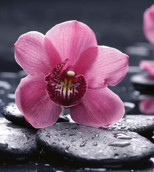 Vliestapete Orchidee 225x250