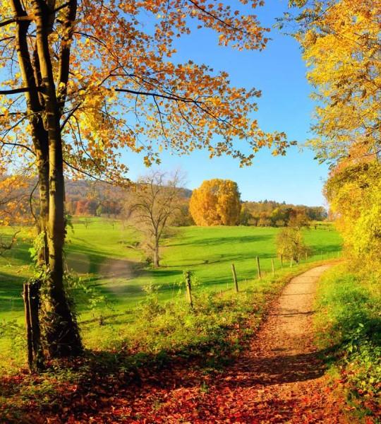 Vliestapete Herbstwiese 225x250