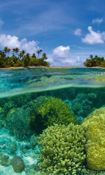 Vlies Fototapete Korallenriff 150x250