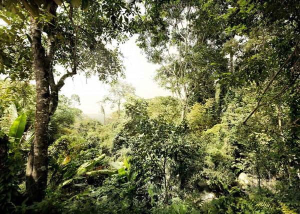 Vliestapete Fototapete Dschungel