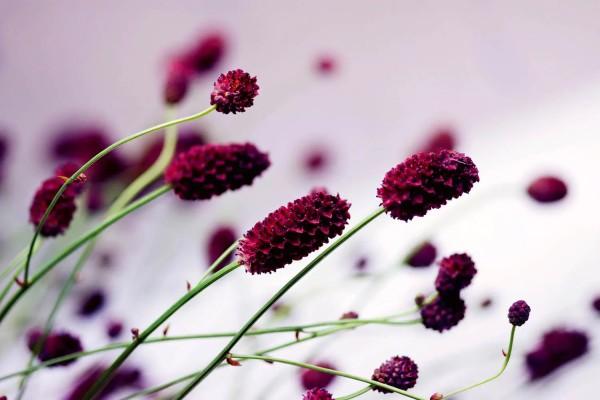 Vliestapete violette Blüte 375x250