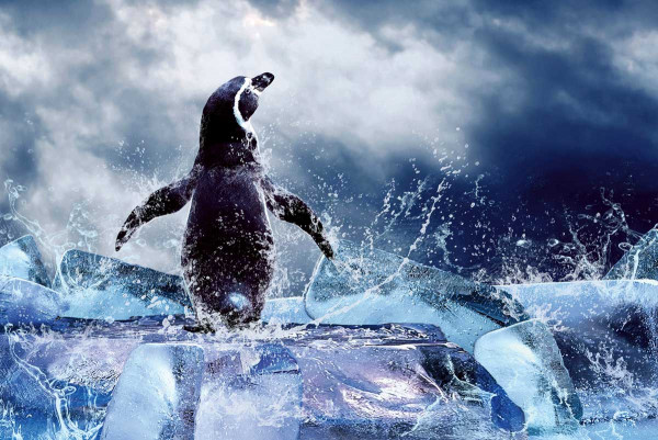 Vliestapete Pinguin 375x250