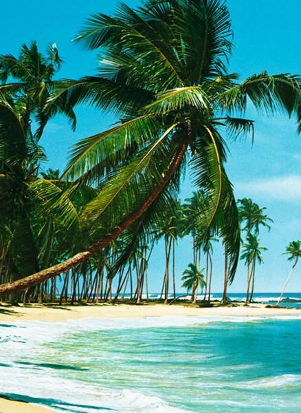 Fototapete Wandbild Palmen Meer