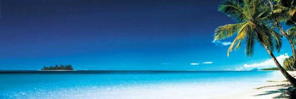 Fototapete Morgens am Palmenstrand Panorama