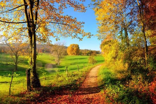 Vliestapete Herbstwiese 375x250