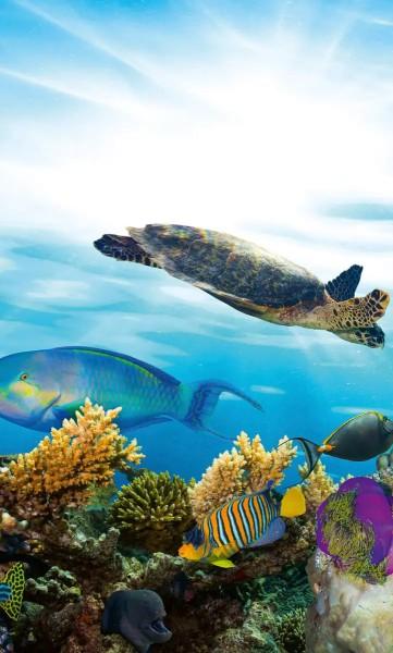 Vlies Fototapete Fisch Meeresbewohner 150x250
