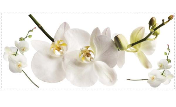 Wandsticker Weiße Orchidee