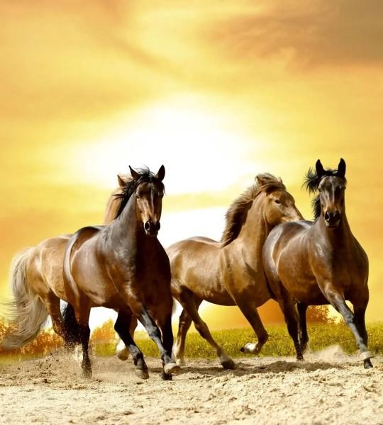 Vliestapete Pferdeherde 225x250