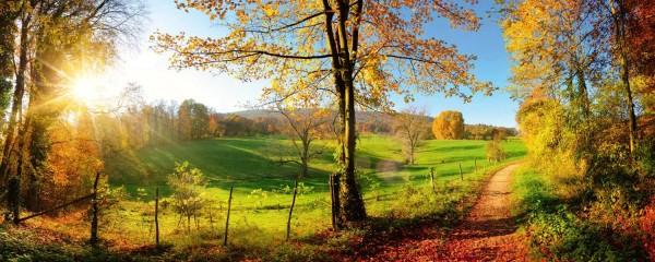 Panorama Vliestapete Herbstwiese 375x150