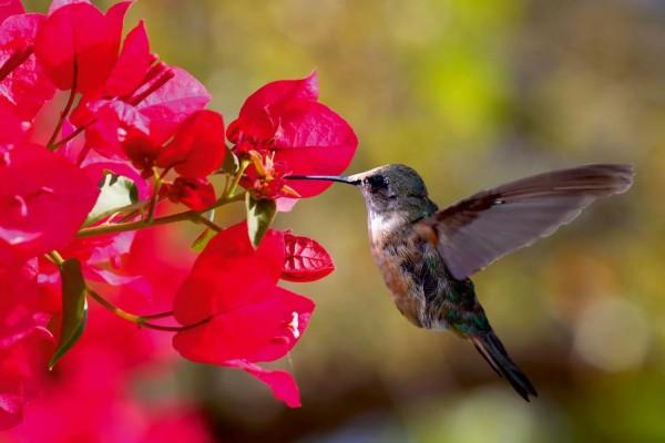 Vliestapete Kolibri 375x250