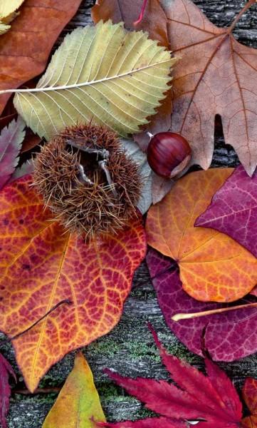 Vlies Fototapete Herbst 150x250