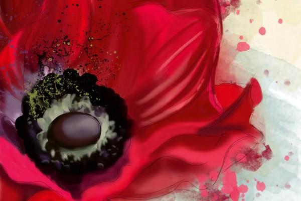 Vliestapete Mohnblüte 375x250
