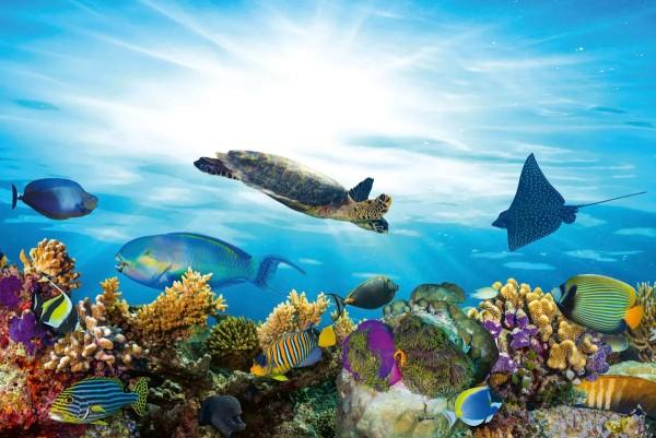 Vliestapete Fisch Meeresbewohner 375x250