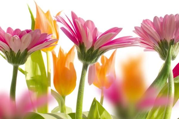 Vliestapete Frühlingsblumen 375x250