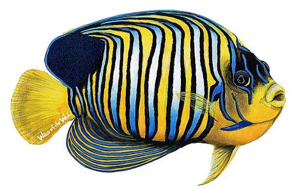Wandsticker Prachtkaiserfisch Unterwasserwelt