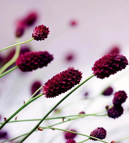 Vliestapete violette Blüte 225x250