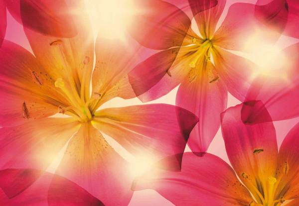 Fototapete Sommer Blüten
