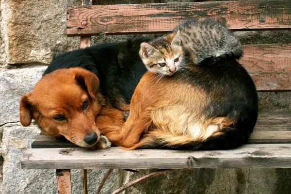 Vliestapete Hund und Katze 375x250