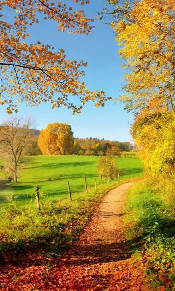 Vlies Fototapete Herbstwiese 150x250