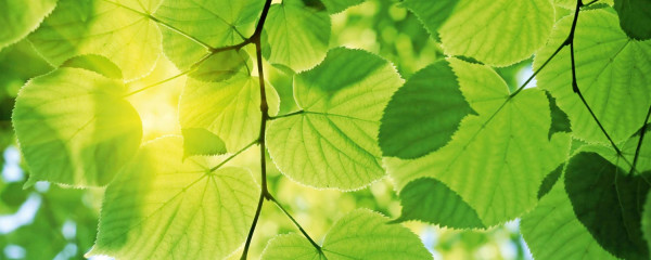 Panorama Vliestapete grüne Blätter 375x150