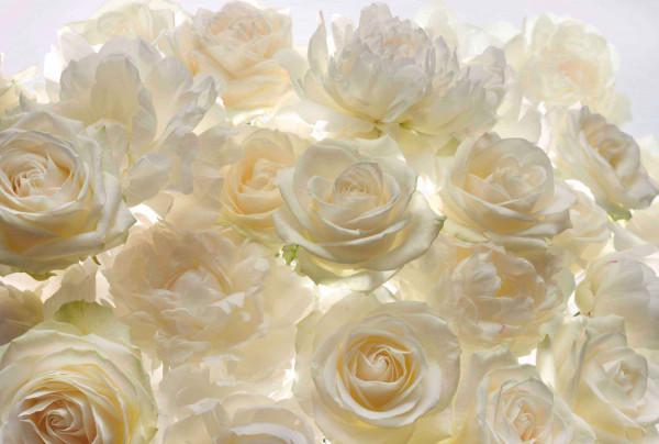 Vliestapete Fototapete orientalische Rosen