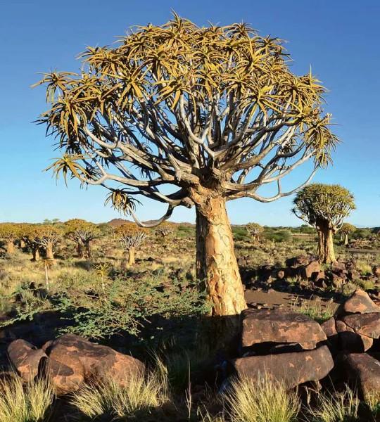 Vliestapete Wüste Namib 225x250