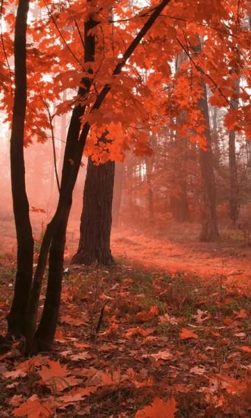 Vlies Fototapete Nebel im Wald 150x250