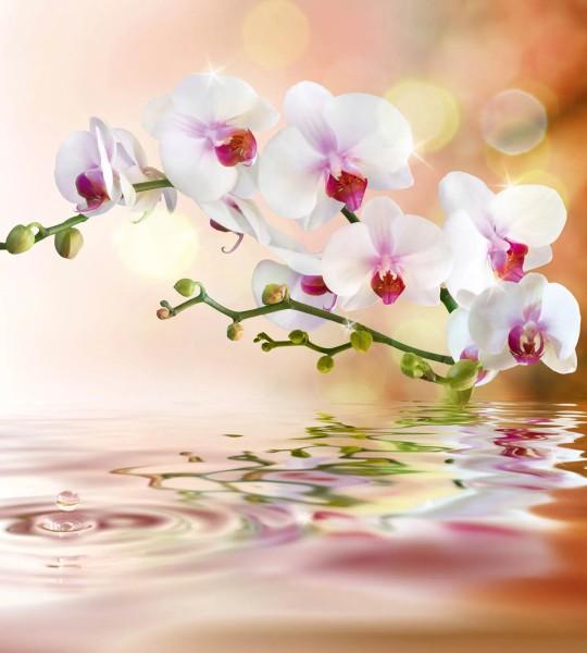 Vliestapete weiße Orchidee 225x250