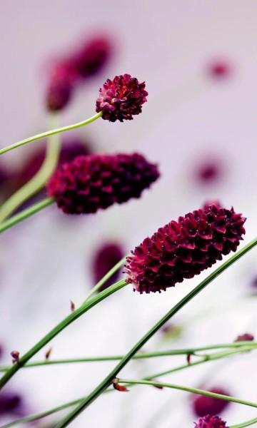 Vlies Fototapete violette Blüte 150x250