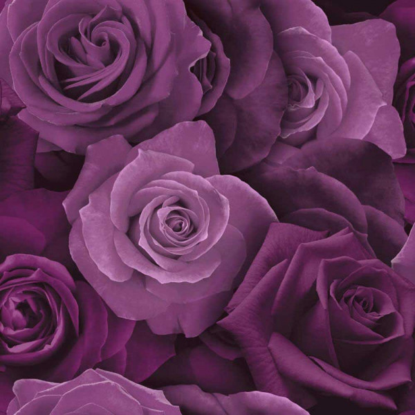 Tapete Austin Rose purpur