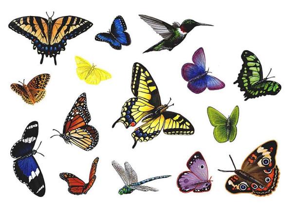 Walls of the Wild Wandsticker Regenwald tropische Schmetterlinge